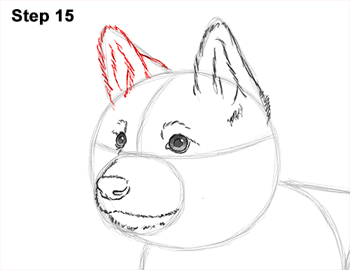 How to Draw a Cute German Shepherd Puppy Dog 15