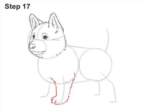 How to Draw a Cute German Shepherd Puppy Dog 17