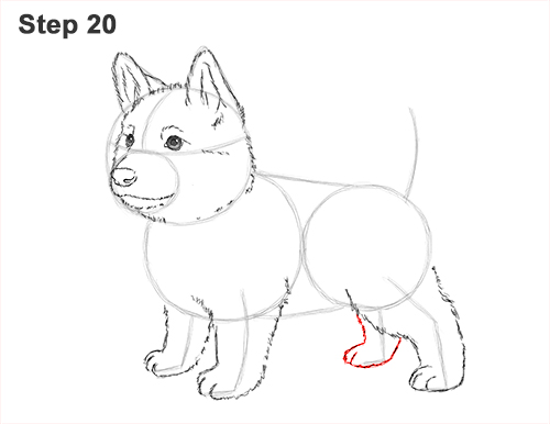 How to Draw a Cute German Shepherd Puppy Dog 20