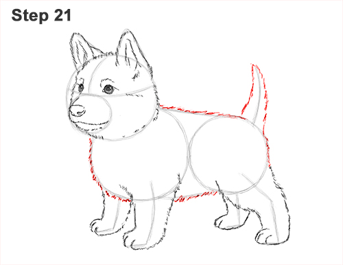 How to Draw a Cute German Shepherd Puppy Dog 21