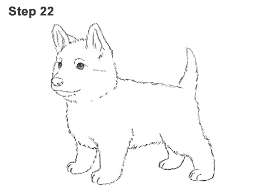 How to Draw a Cute German Shepherd Puppy Dog 22