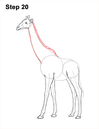 How to Draw a Giraffe (Color) VIDEO & Step-by-Step Pictures