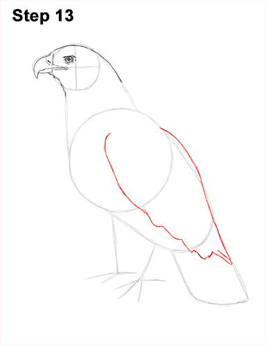 Draw Golden Eagle Bird 13