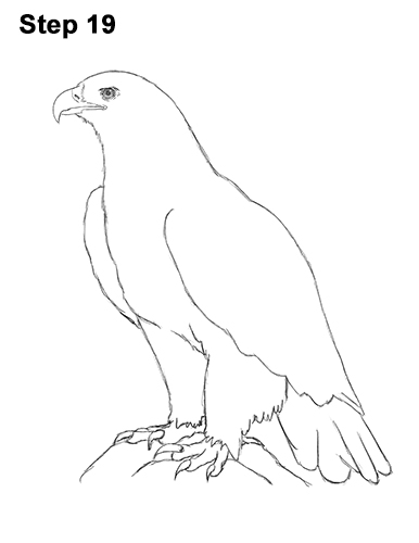 Draw Golden Eagle Bird 19