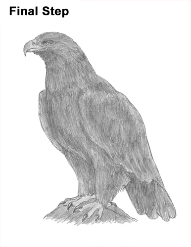 Draw Golden Eagle Bird