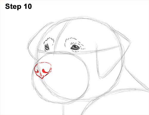 How to Draw a Golden Retriever Dog 10