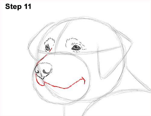 How to Draw a Golden Retriever Dog 11