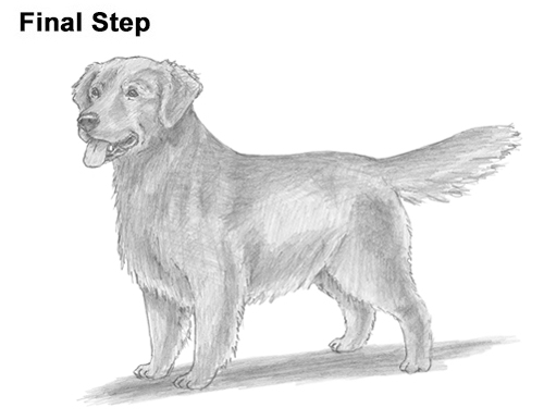 Line Drawing Golden Retriever : How to draw a dog golden retriever