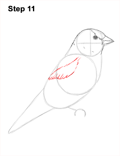 Draw American Goldfinch Bird 11