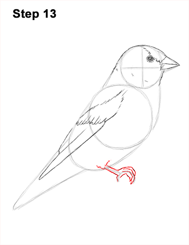 Draw American Goldfinch Bird 13
