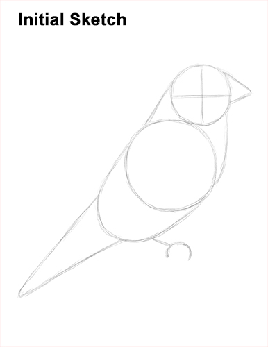 Draw American Goldfinch Bird Sketch