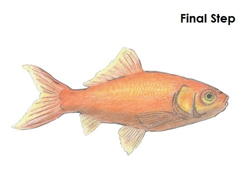 Draw Goldfish Last