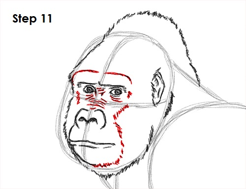 Gorilla Face Line Drawing : How to draw a gorilla