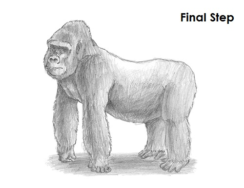 King Kong Drawing Step by Step Drawing Guide by