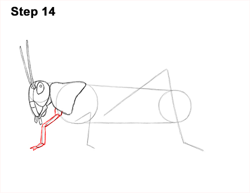 How to Draw Grasshopper Insect Bug 14