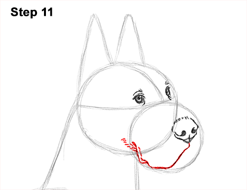 How to Draw a Tall Great Dane Dog 11