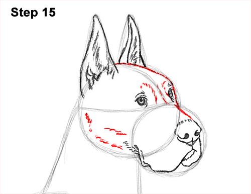 How to Draw a Tall Great Dane Dog 15