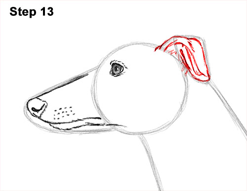 How to Draw Italian Greyhound Whippet Pupppy Dog 13