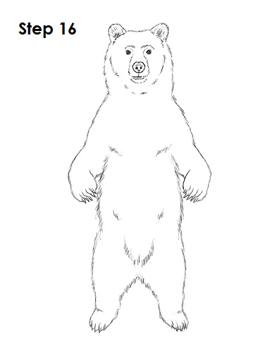 Draw Grizzly Bear 16
