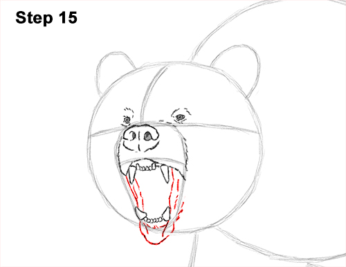 Draw a Growling Grizzly Bear Walking 15