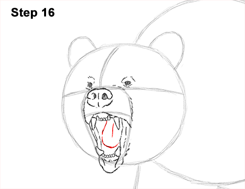 Draw a Growling Grizzly Bear Walking 16