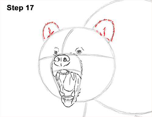 Draw a Growling Grizzly Bear Walking 17