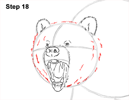 Draw a Growling Grizzly Bear Walking 18