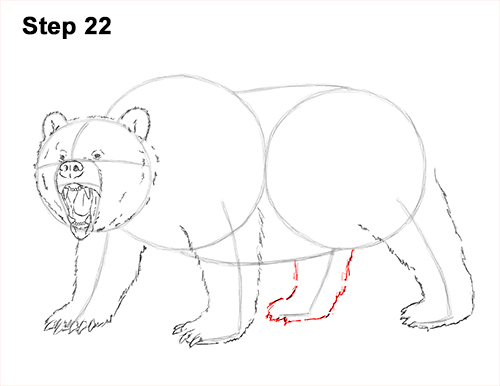 Draw a Growling Grizzly Bear Walking 22