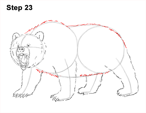 Draw a Growling Grizzly Bear Walking 23