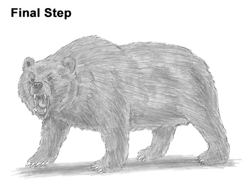 Draw a Growling Grizzly Bear Walking