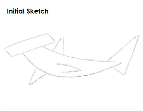 Draw Hammerhead Shark Sketch