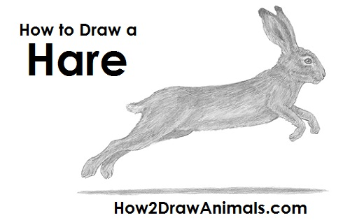 Hare running drawing - photo#13