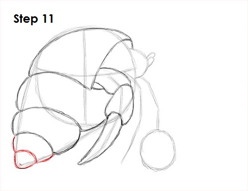 Hermit Crab Shell Drawing Draw Hermit Crab 11