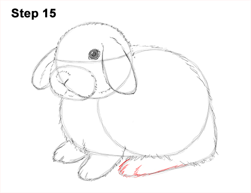 Draw Holland Lop Rabbit 15