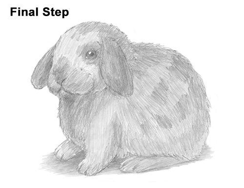 Draw Holland Lop Rabbit
