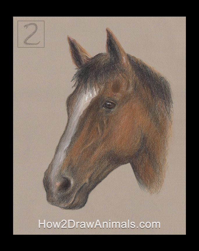 Horse Portrait Drawing