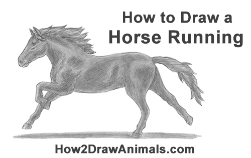 How to Draw a Running Horse