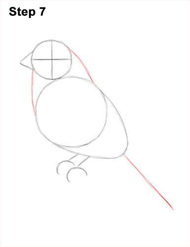 How to Draw Red House Finch Bird Color 7