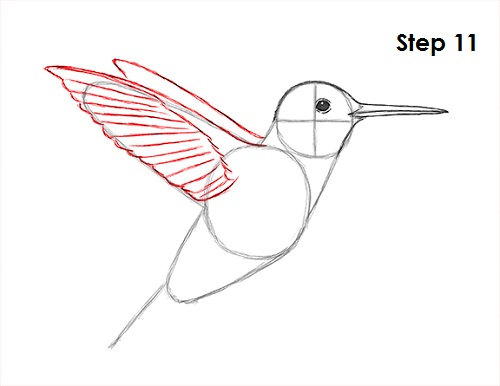 Draw hummingbird 11