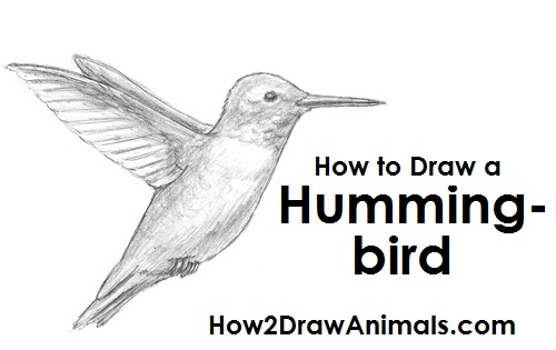 Draw Hummingbird