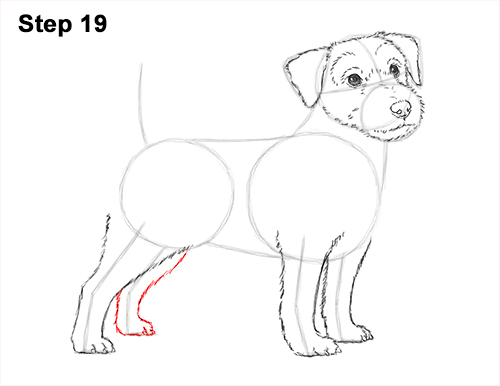 How to Draw a Cute Jack Russell Terrier Puppy Dog 19