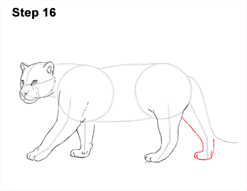 Draw Jaguar Big Cat 16