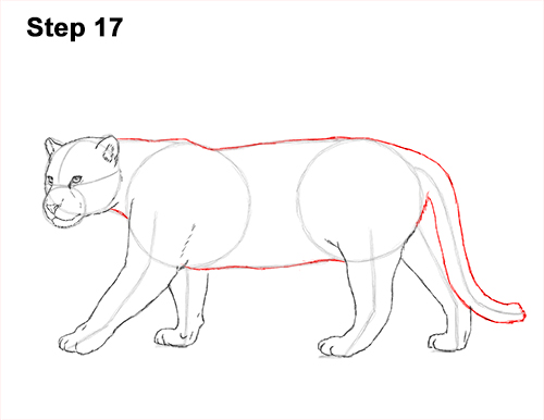 Draw Jaguar Big Cat 17