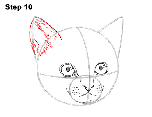 How to Draw Cute Cat Kitten Head Face Portrait 10