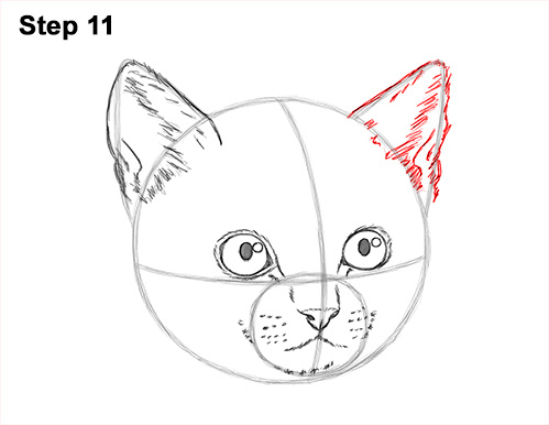 How to Draw Cute Cat Kitten Head Face Portrait 11