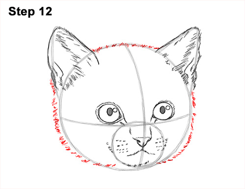 How to Draw Cute Cat Kitten Head Face Portrait 12