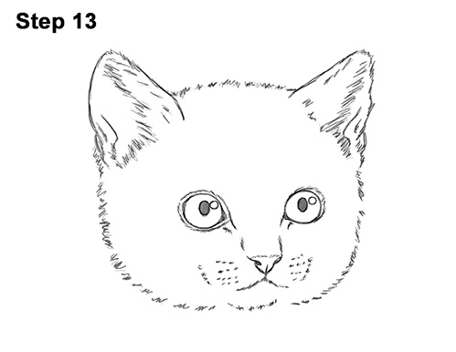 How to Draw Cute Cat Kitten Head Face Portrait 13