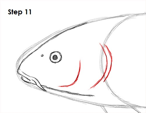 Draw Koi Fish 11