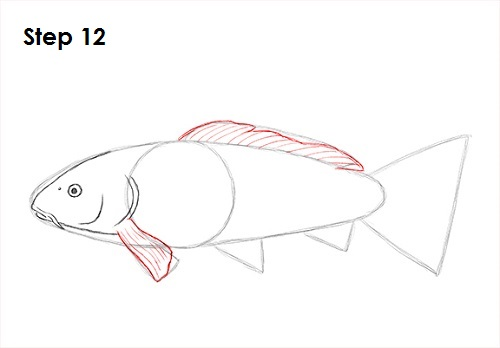Draw Koi Fish 12