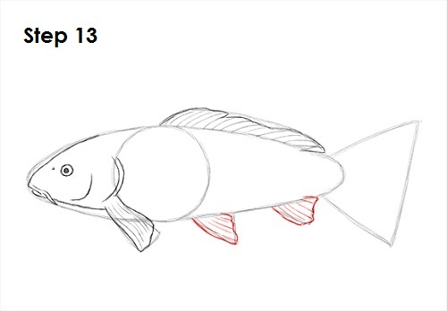 Draw Koi Fish 13